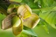 Ratowniczka Snobki: co można zrobić ze skórką od banana?