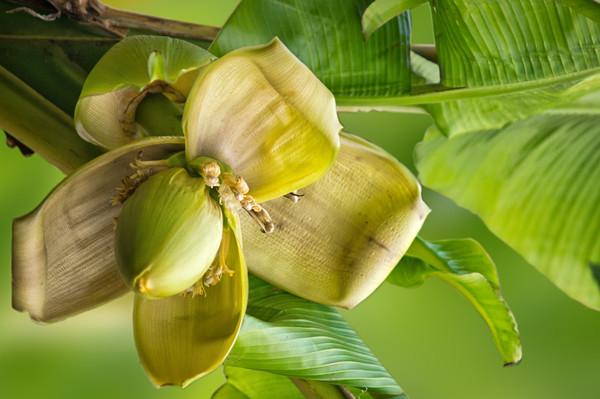 Ratowniczka Snobki: co można zrobić ze skórką od banana