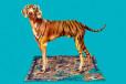 Oko i tygrys w najnowszej kolekcji Kenzo