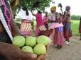 Olejek marula to kolejne odkrycie kosmetologów, które pochodzi z Afryki. Fot. African Botanics